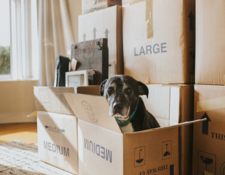 A cure dog sitting in a cardboard box surrounded by other moving-out boxes
