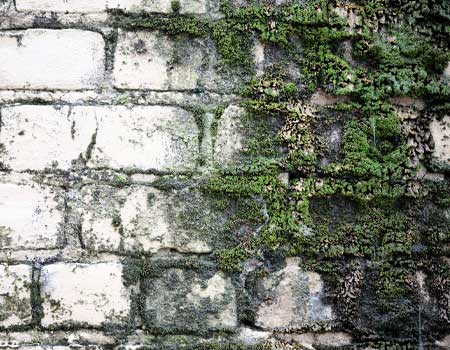 Old Brick Wall with Moss and Water Damage