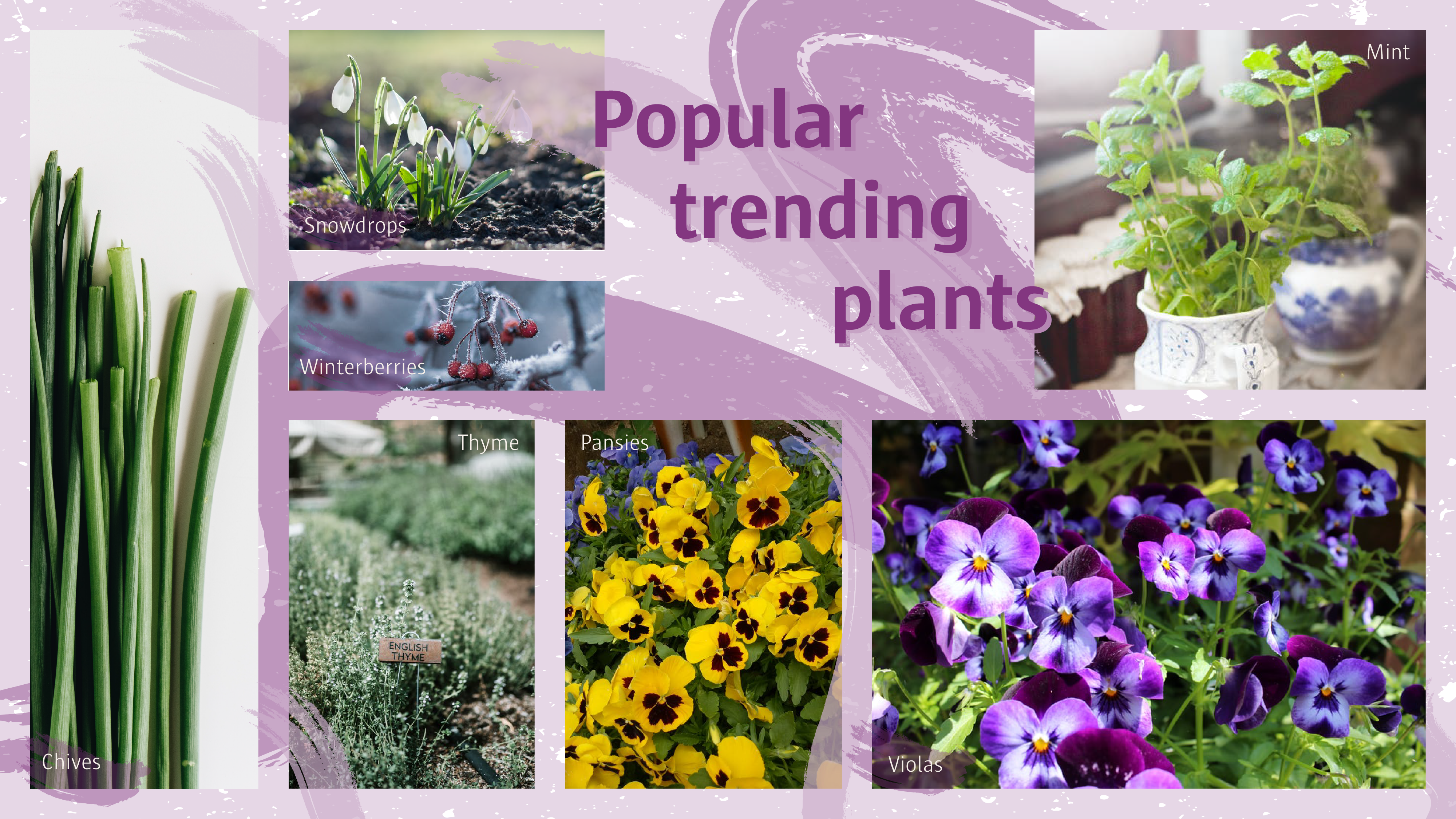 Popular flowers which are trending.