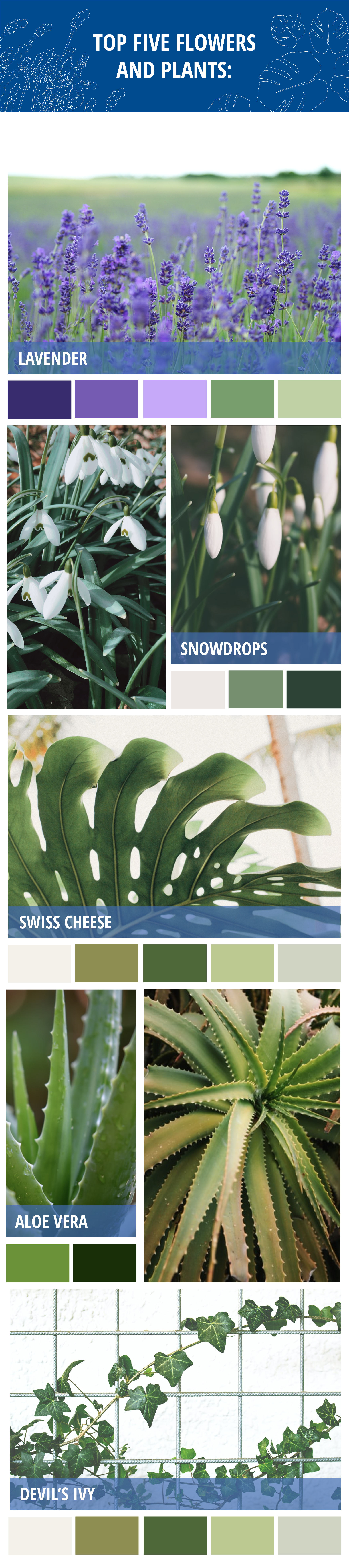 top five flowers and plants