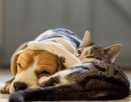 A picture of a cat and dog sitting together.