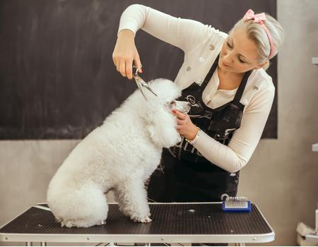 Lady grooming a dog