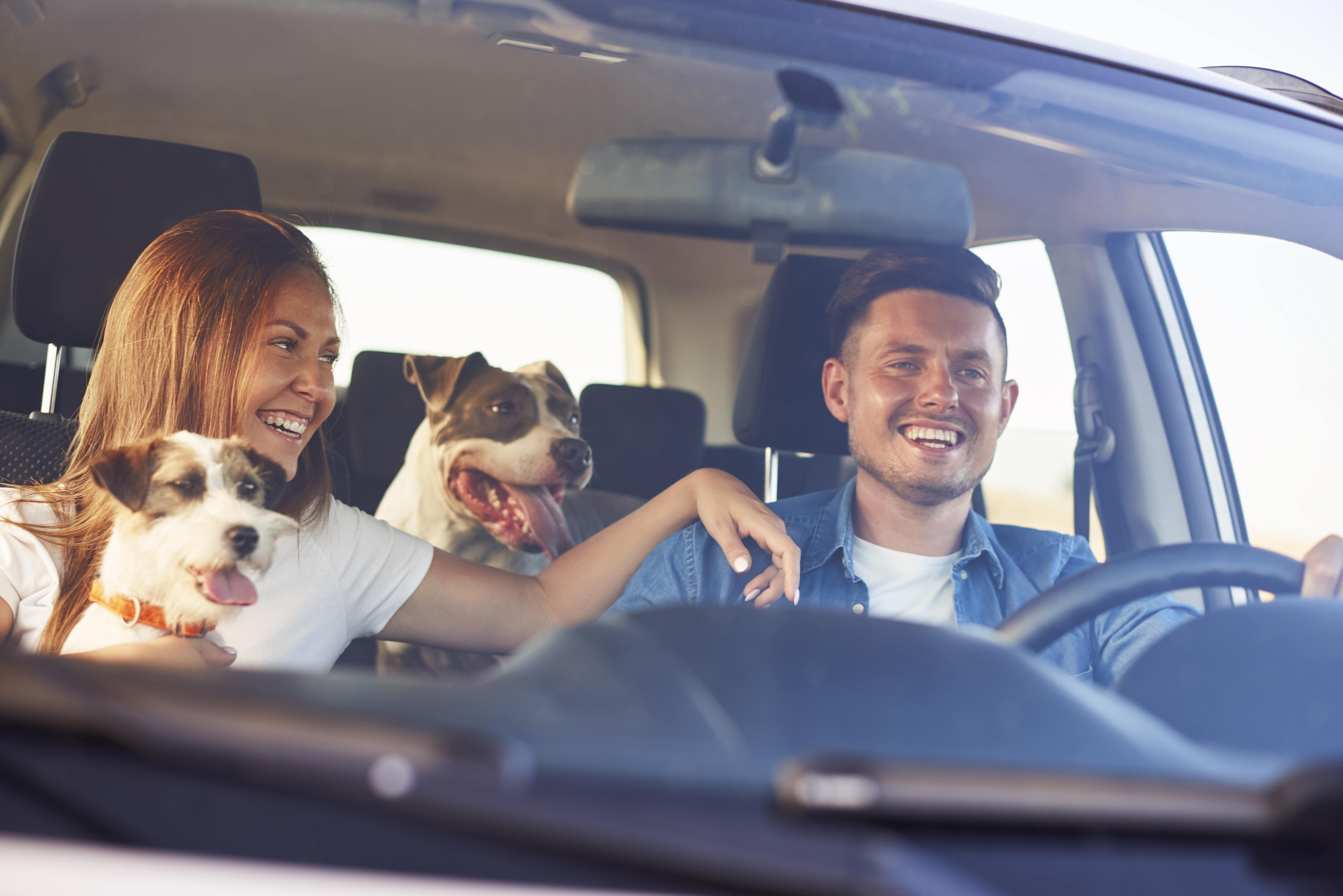 couple driving in car together with dogs