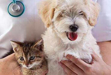 Kitten and puppy with a vet