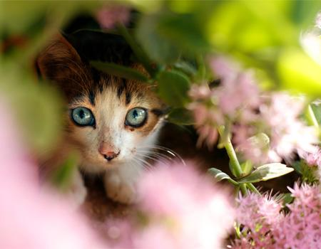 Kitten hiding in flowers
