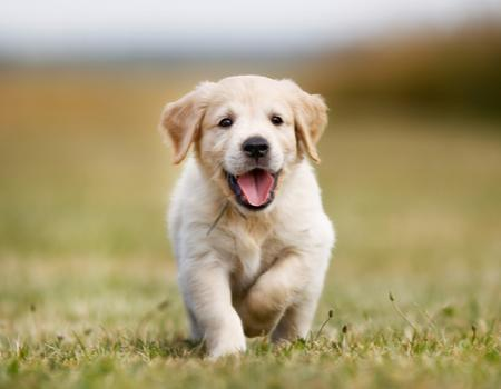puppy running on field